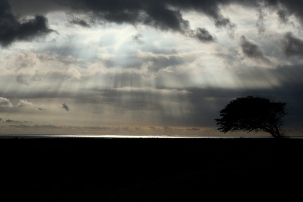 Dramatic view of crepuscular rays beaming down from the clouds with silhouette of a windblown tree in the foreground.