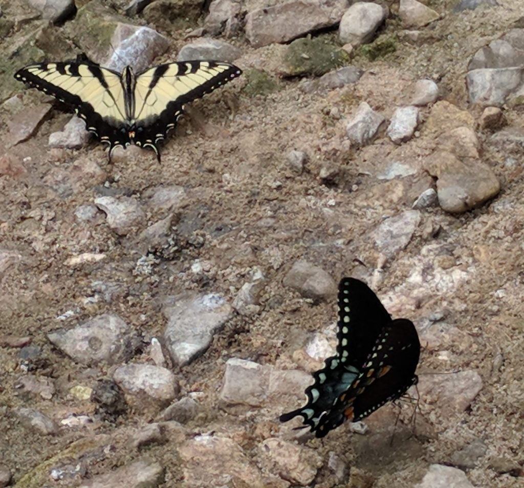 Photo of two butterflies