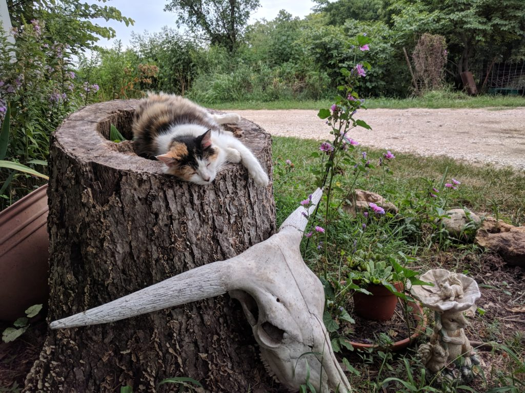 A cat napping on the inside of a tree stump with a horned facial skeleton leaning against the tree stump and purple flowers in the background.