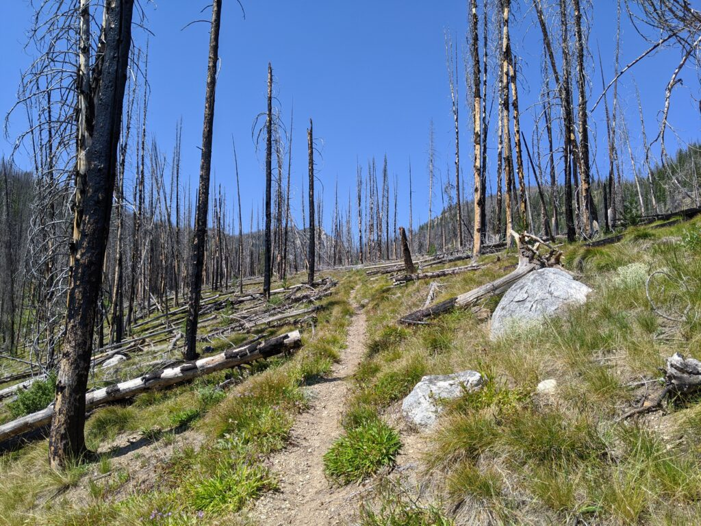 A view of the trail surrounded by burned trees.