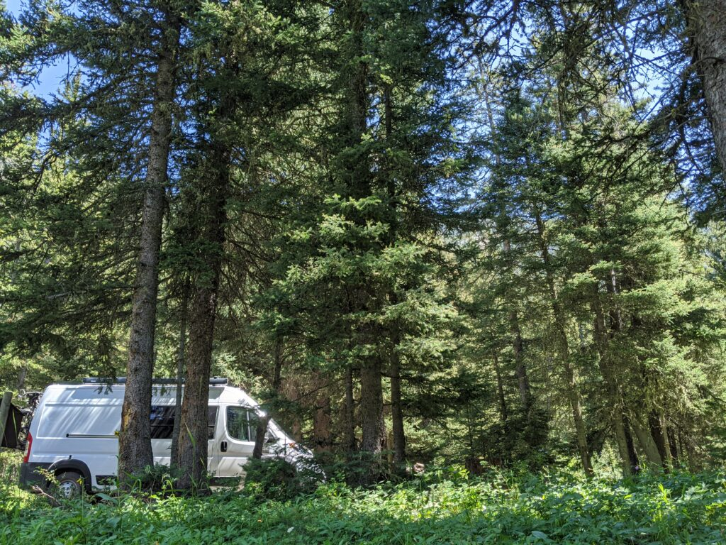 The van tucked behind the trees in a heavily forested area.